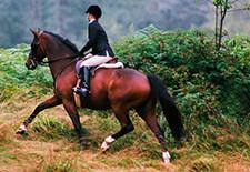Sheepskin Horsetack