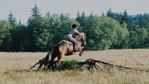 Sheepskin Saddle Pads